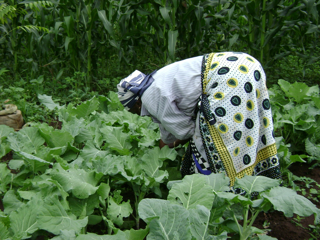 Jardinage le monde en images for Jardinage le monde