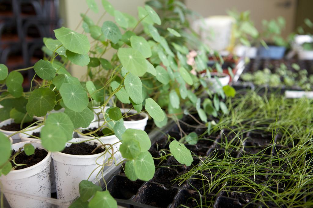 Activit de jardinage le monde en images for Jardinage le monde