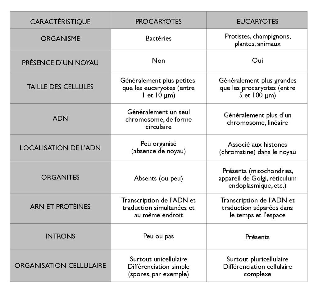 Diff rences entre procaryotes et eucaryotes le monde en images - Difference entre les cookeo ...