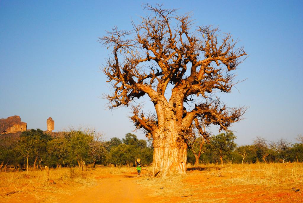 Baobab Le Monde En Images