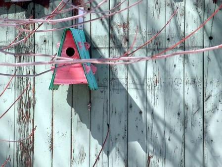 cabane d 39 oiseau le monde en images. Black Bedroom Furniture Sets. Home Design Ideas